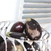Aubergine – en bortglömd grönsak