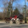 Vackert o underhållande i Central Park