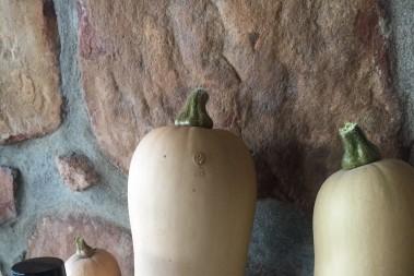 Färskt ur pappas grönsaksland
