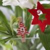 LCHF och sötsug, juletid!