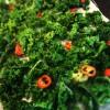 Rostat grönkål m salt o chili