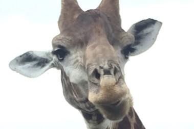 Safari i Sydafrika