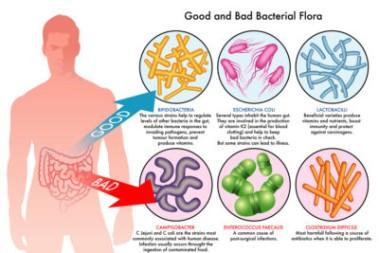 En fungerande tarmflora för hälsans skull