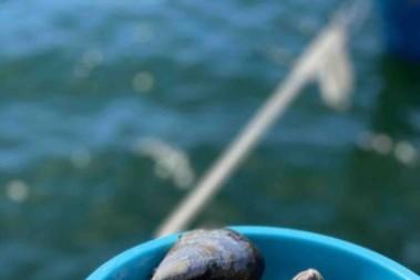 Färska musslor i vår kök