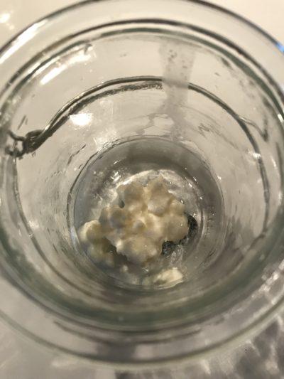 Probiotika i form av kefirgryn